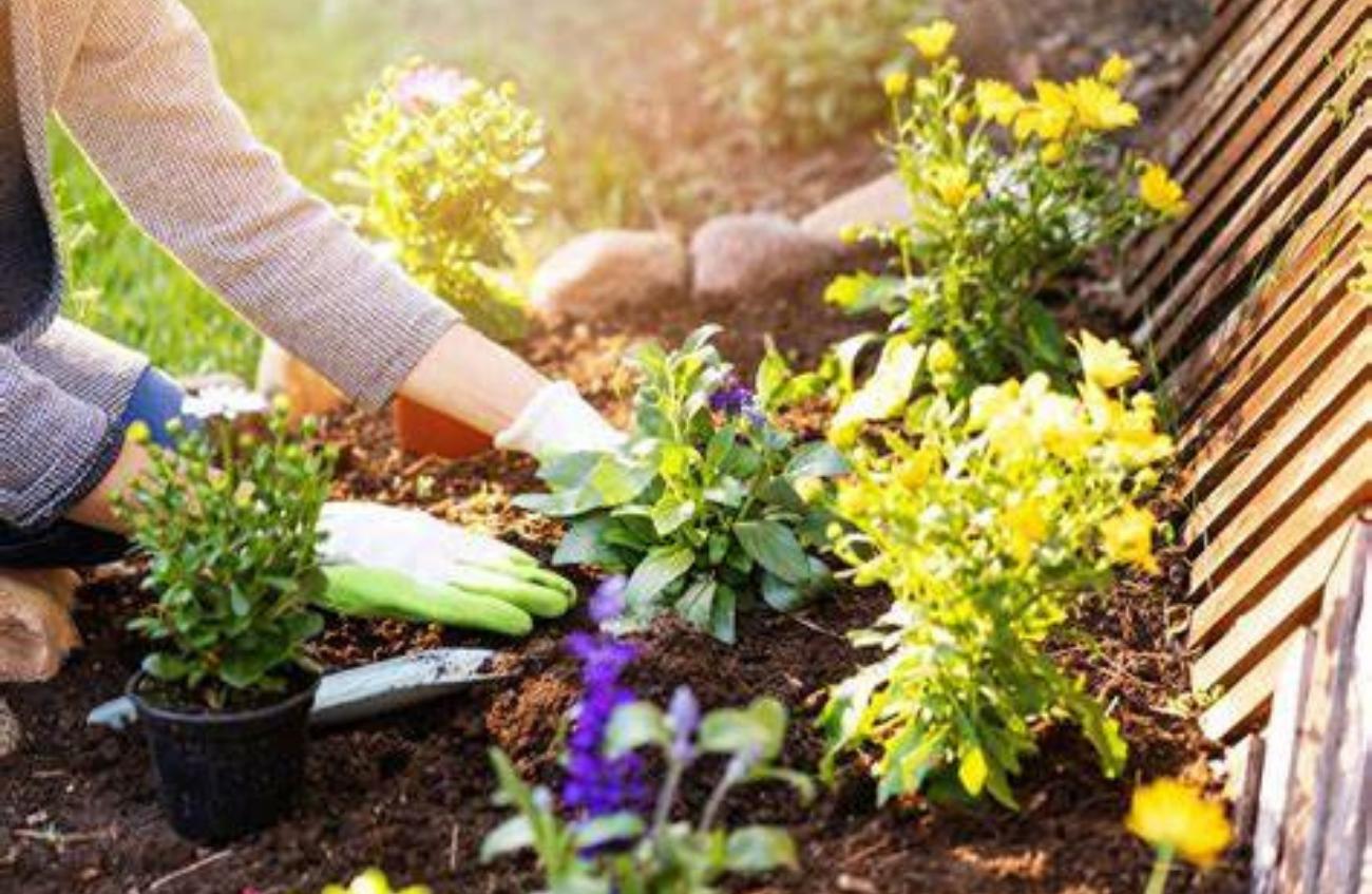 Gardener rates